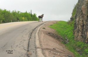Newfoundland Speedbump